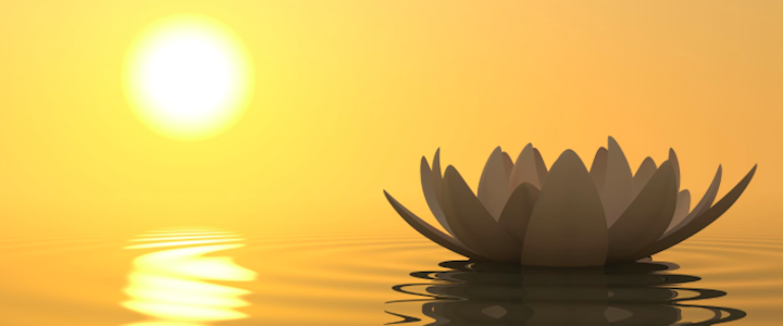 Lotis flower signifying calm and intention.