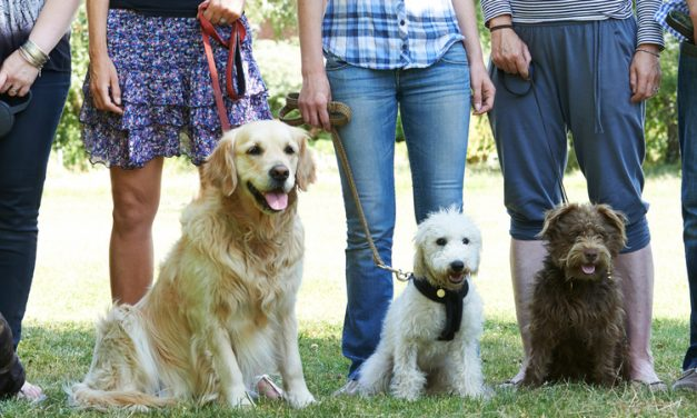 Dog Obedience-Various classes available!